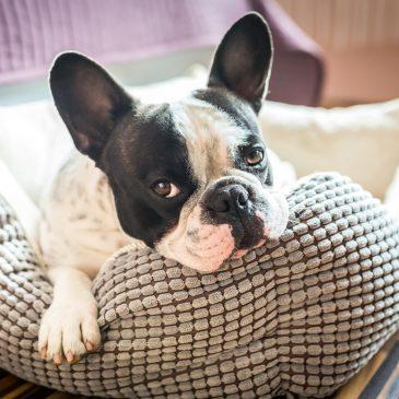 Pension pour chien à Gréoux-les-Bains, dans les Alpes de Haute Provence 04