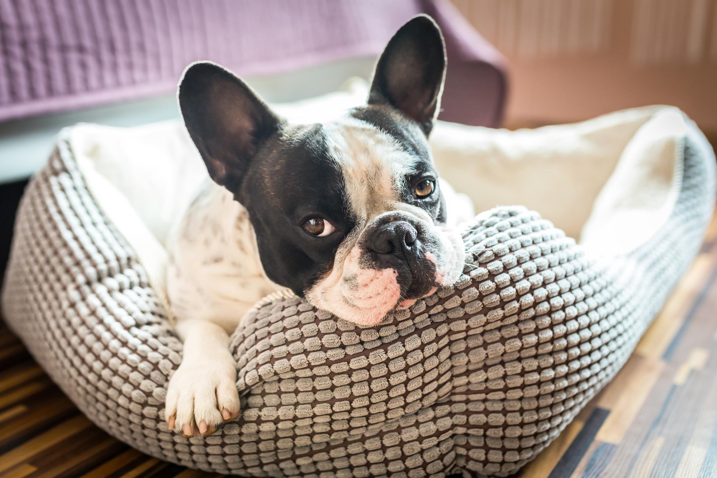 pension famililale reservée aux petits chiens